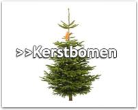 Kerstbomen kopen? Alle kerstbomen online  